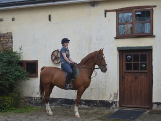 Easter Hall Park Riding & Carriage Driving Holiday - Petrockstowe vacation rentals