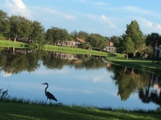 Beautiful water view home near gulf beach and golf - Port Charlotte vacation rentals