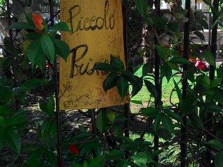 """B&B """"IL PICCOLO PRINCIPE"""" ACCOGLIENTE ED ECONOMICO - Torrice vacation rentals"""
