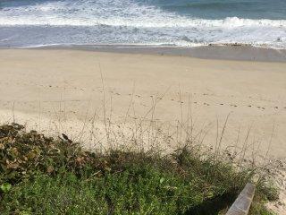 Sea Turtles and Sunrises - Beachfront - Melbourne Beach vacation rentals