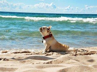 PET FRIENDLY & OCEAN VIEW, private rooftop & pool - Playa del Carmen vacation rentals