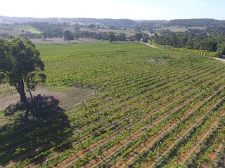 Adelaide Hills Vineyard studios - Macclesfield vacation rentals