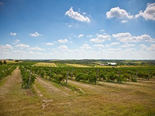Guest house on Oklahoma's Largest Winery/Vineyard with Fishing and Rodeo - Anadarko vacation rentals