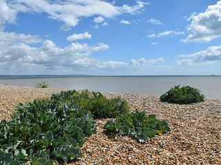 Beautifully appointed studio apartment with superb sea views. - Littlestone vacation rentals
