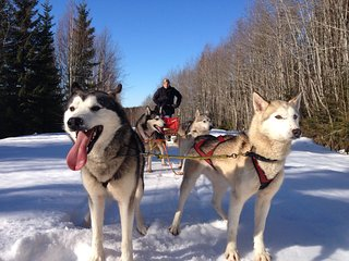 Enjoy and relax in Swedish nature - Sollefteå vacation rentals