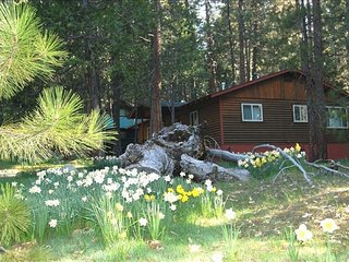 Cozy 2 bedroom House in Wawona with A/C - Wawona vacation rentals