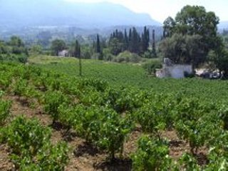 Sweet Vineyard of Samos Farm House - Samos Town vacation rentals