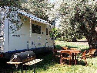 Autocaravan in olive tree grove - Noto vacation rentals
