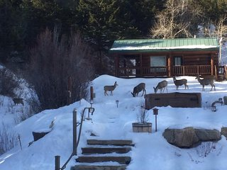 Haywood Cabin at Two Bears Inn Bed & Breakfast - Red Lodge vacation rentals