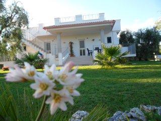 Piana dei Greci - Peschici vacation rentals