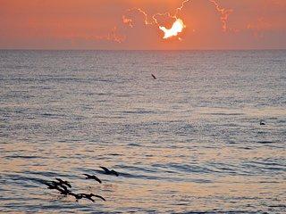 Ocean Front Suite | Sea Turtles & Sea Breeze - Melbourne Beach vacation rentals