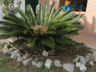 Villa Cycas, wide , sunny and comfortable - Sperlonga vacation rentals