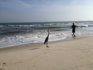 DEAL: August 5-12 - $1,590! 12-19 and 19-26 - $1190!!! - Saint George Island vacation rentals