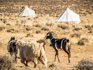 Bell Tent (2) Glamping on Navajoland - Page vacation rentals