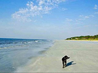 Beautiful 34 Ocean Breeze beach oriented. Pet friendly, free bikes and tennis - Hilton Head vacation rentals