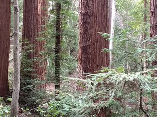 The Getaway in the Redwoods - Spectacular Forest Floor Views - Boulder Creek vacation rentals