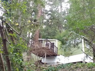 The Green Cabin In Towering Redwoods - Boulder Creek vacation rentals