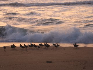 Oceanfront Beach House + 2 Free Monterey Bay Aquarium Tickets - Moss Landing vacation rentals