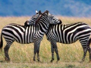 spice tour, dolphin tours,Jozani Forest ,safari blue .mt-kilimanjaro and safaris - Stone Town vacation rentals