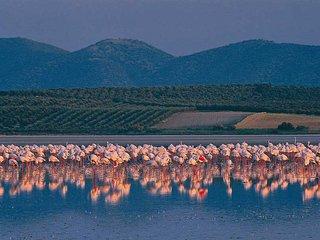 Flamingo Park Chalet, near Antequera Malaga. - Fuente de Piedra vacation rentals