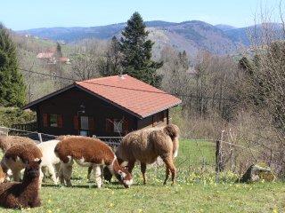 chalet les bouleaux vue sur la vallée - La Bresse vacation rentals