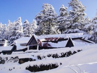 Peaceful and luxurious stay for a large group - Shimla vacation rentals