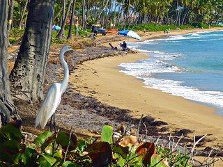 e6Spacious Villa Faces Manicured Golf Course-Beach Just Steps Away - Palmas Del Mar vacation rentals