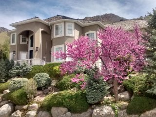 Fun, quiet apartment in the foothills near it all! - Holladay vacation rentals